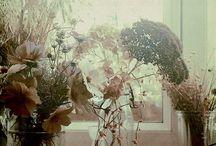SOFT / by Ilona Jongepier