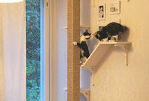 Kissojen kiipeilyseinä