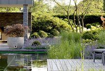 """Landscape & """"Green"""" Home"""