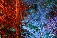 Winter Holiday Lighting