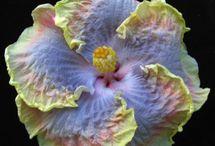 Flowers / by Debbie Metzger