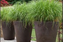 Terrasse Pflanzen
