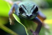 Terrarium / rainforest world