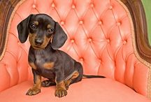 Love is a doxie called... / by Sarah Lester