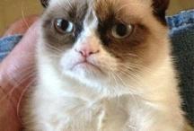 Grumpy cat / by Shelley Moore