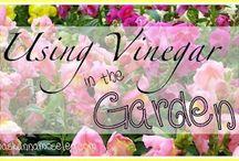 gardening tips / by Cynthia Monroe