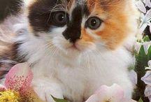 Imágenes de gatos lindooos