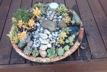 Little fairy garden / Succulents  Rocks Bark Sticks