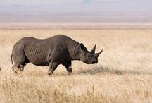 ANIMAL • Rhino