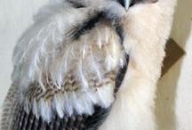 Woodstock owl
