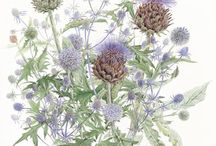 THISTLE and ...