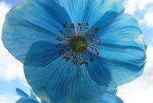 beautiful blue