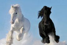 en sevdiğim atlar