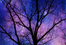 The Magic In Trees