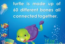 Turtle Facts / This board will consist of fun facts about Turtles.