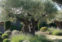 Olasz kert