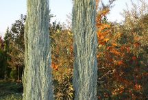 TREES FOR TEXTURE AND COLOUR