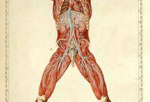Visionary Anatomy / by Narangkar Glover