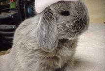 Christmas Time! / Small cute pets having the time of their lives ready for the festivities! Pin your favourites! #cute #bunnies # Christmas