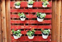 Herb & Vegie Garden