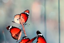 mariposas/ butterflies