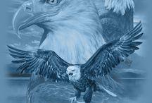Αετός 9