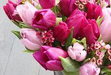 flowers - spring