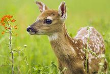 Tapety - zwierzęta - jelenie i podobne