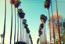 mydreaming LA