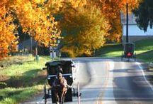Amish, Mennonite, & Hutterite / by Jody Browne