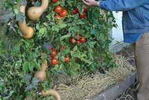 Jardins légumes