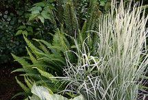 Plante kombinasjoner
