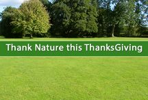 Thanksgiving / Let's thank nature this thanksgiving. #Thanksgiving #earth #planet #motherearth #green