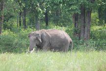 Best Tourist Places Kerala | Visitorkerala