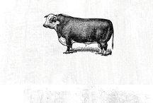 húsdiszkont
