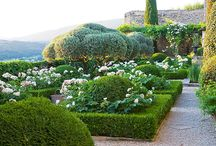 Clipped box hedges