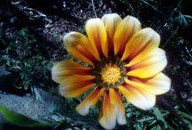 l love nature