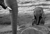 Elephants...just because / by Sarah Travis