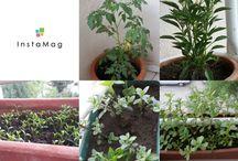 bahçe, balkon,bitki