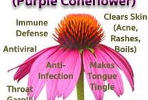 Herbs Make Great Home Remedies! / Based on 20 years of holistic practice by America's premier holistic MD.  Everything I learned from having epilepsy and learning how to completely cure it over 20 yrs. ago. Everything you need to know about healing yourself naturally without doctors, medications or surgery.  -Cynthia Foster, MD #naturalremedies #herbalmedicine #healingwithherbs #holisticmedicine #holisticMD