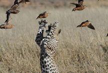 Amazing & Beautiful Animals