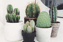 Joli plantes et cactus