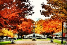 Boston in the Fall / by Katie George