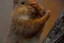 squirrals