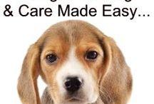 beagle basics
