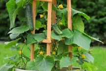 Pěstování v truhlících