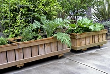"""PLANTED- RollingPlanters -Mobile Planters on Wheels / Commercial quality """"rolling planter"""" 25"""" tall  Grow almost anything, great for plants that require deep roots.  Grow everything including trees!  Self watering and Aquaponic options available.  Fully assembled (NOT A KIT).  Planters made from sustainably grown wood (cedar and fir), case hardened epoxy / glass coated hardware ( NO NAILS or STAPLES ), trip-ply pond liner, locking wheels and drains. Designed, handmade Ventura, CA, USA"""