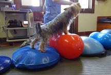 The Animal Rehabilitation Center of Michigan / The Animal Rehabilitation Center of Michigan (ARC) was founded in 2001 with a vision to help dogs live a full, pain-free life.