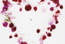 valentines / by Hana Cookson