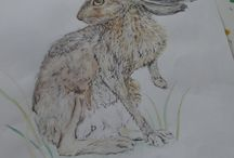Sketches & the Mosney Animals